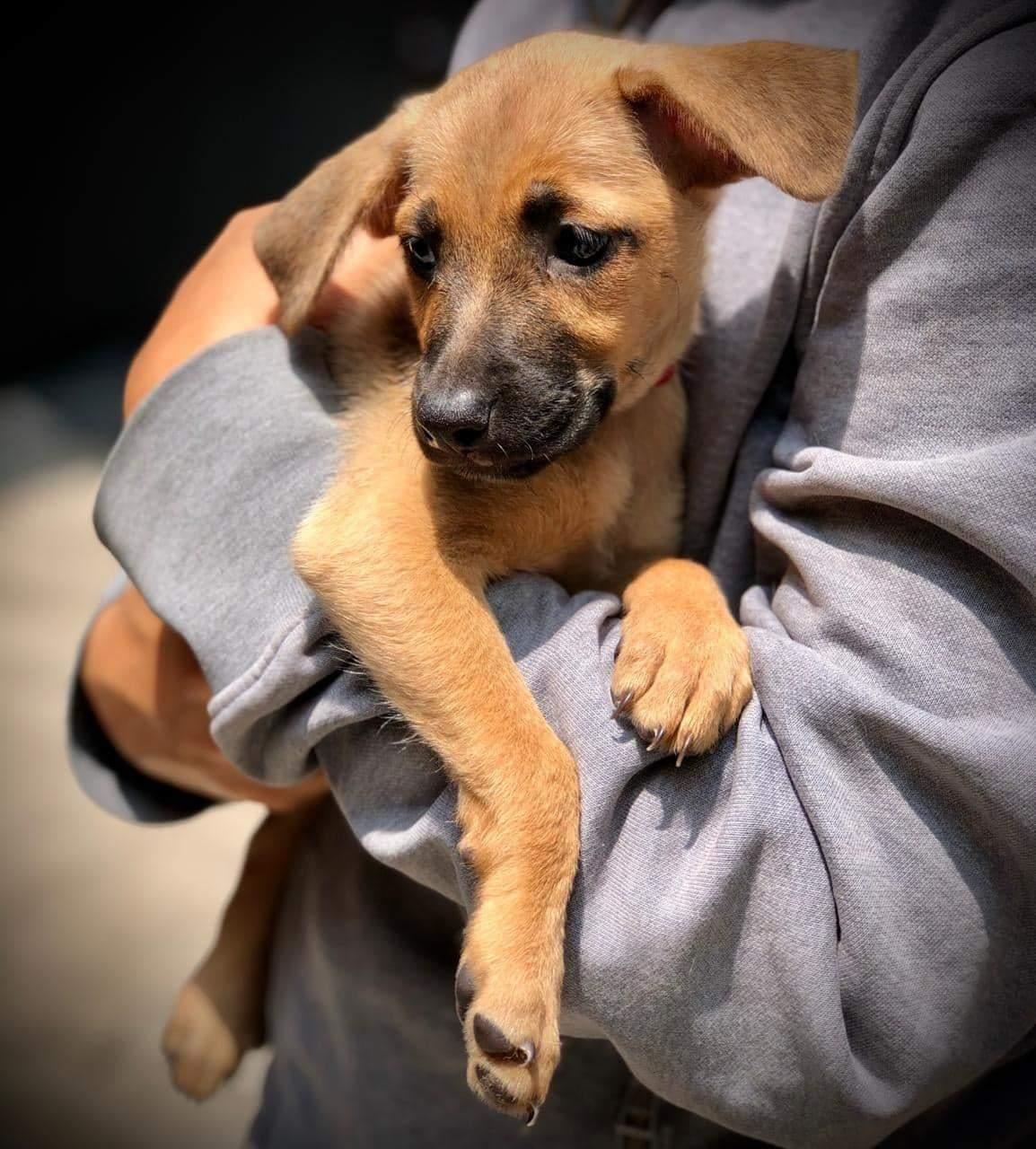 perros rescatados en CDMX
